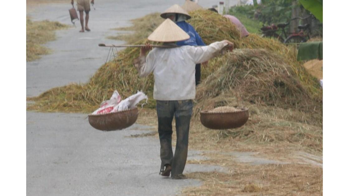 Le riz séche sur la route