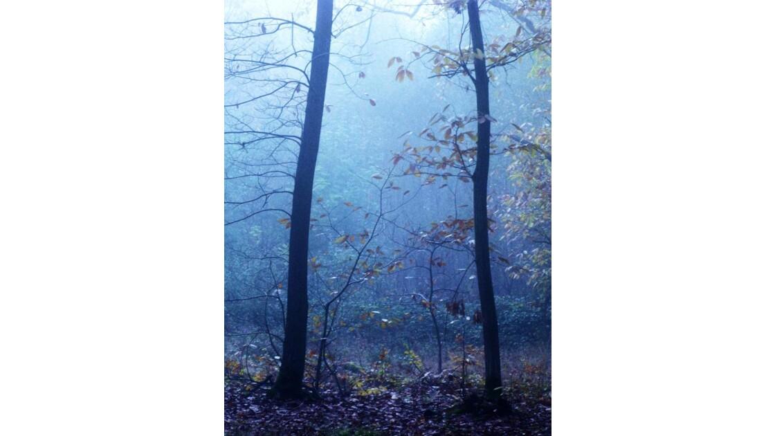 033 - Ile de France - 2 arbres