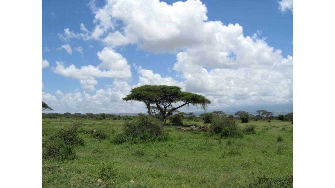 savane amboseli, Kenya