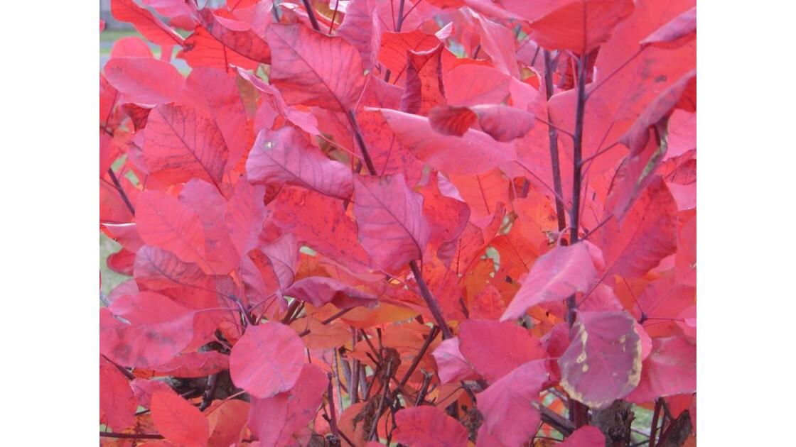 Arbustes d'automne