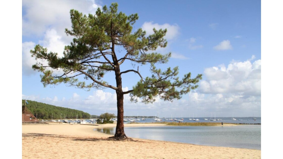 """""""L'arbre solitaire à la plage ..."""""""