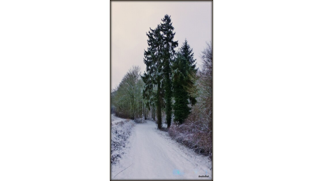 Un matin d'hiver à la chasse aux photos
