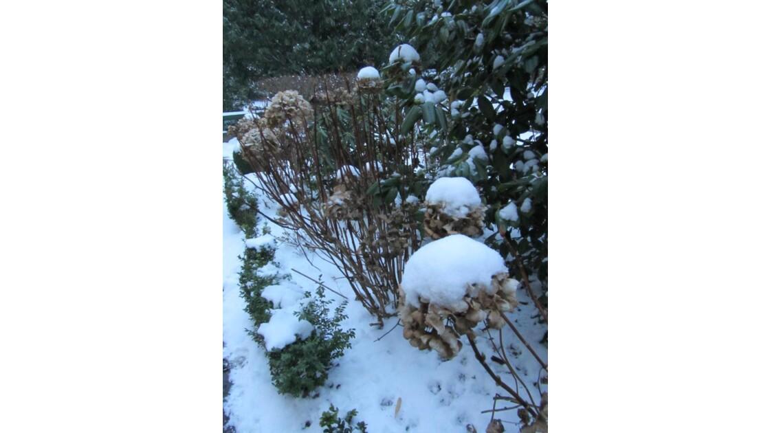 Les toques blanches du jardin