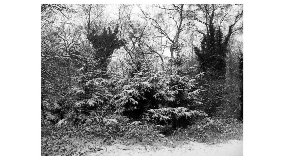 Forêt du Chêne à Leu I