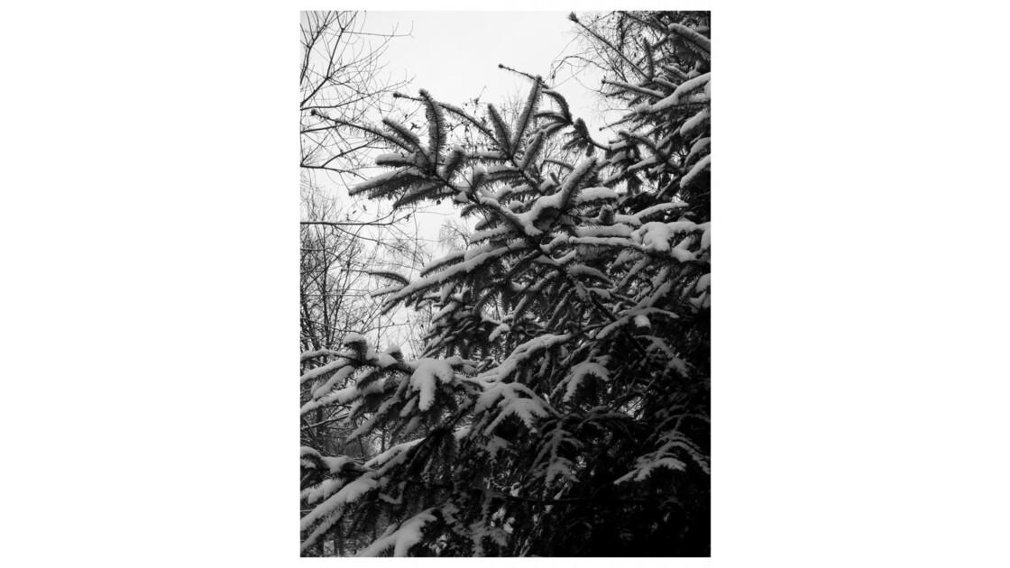 Forêt du Chêne à Leu II