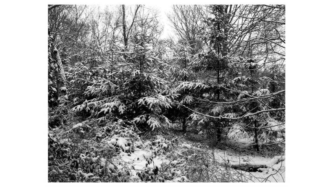 Forêt du Chêne à Leu III