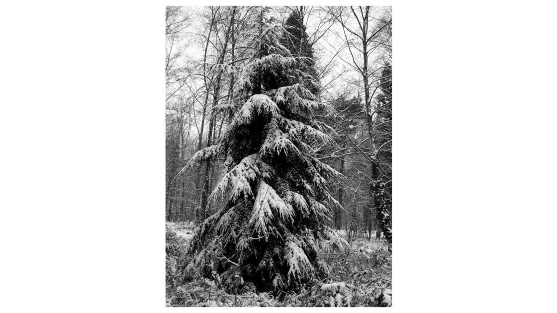 Forêt du Chêne à Leu VII