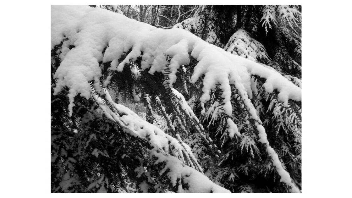 Forêt du Chêne à Leu VIII