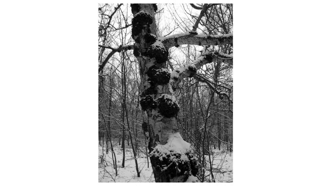Forêt du Chêne à Leu X