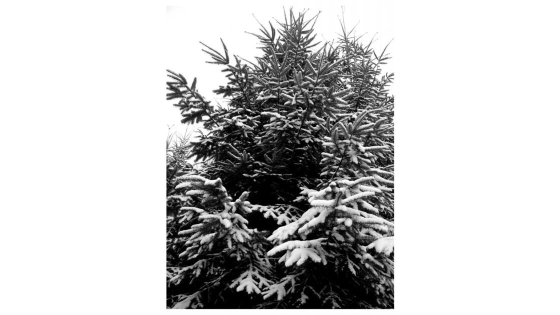 Forêt du Chêne à Leu XI