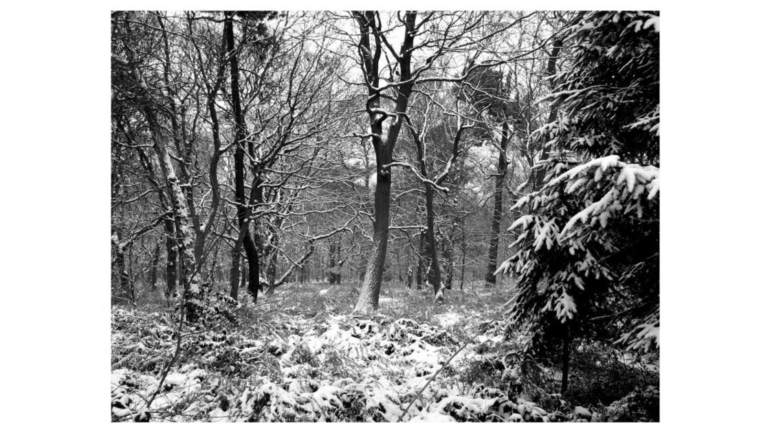 Forêt du Chêne à Leu XII