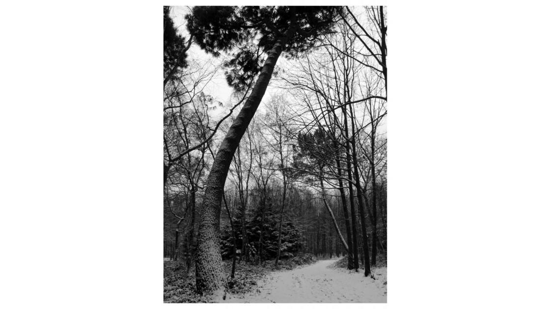 Forêt du Chêne à Leu XIII
