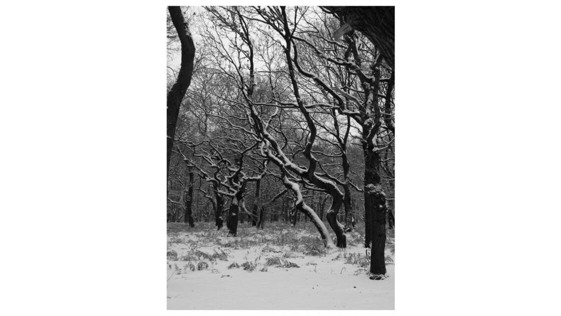 Forêt du Chêne à Leu XIV