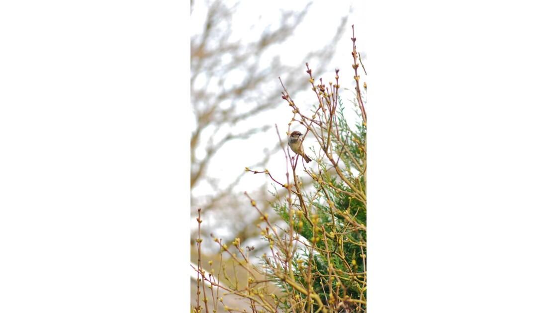 En attendant les premiers lilas