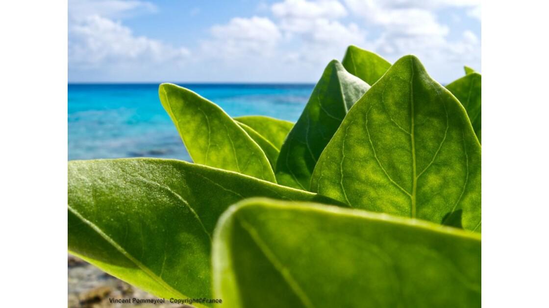 Vert ou bleu ? Lagon de Rangiroa