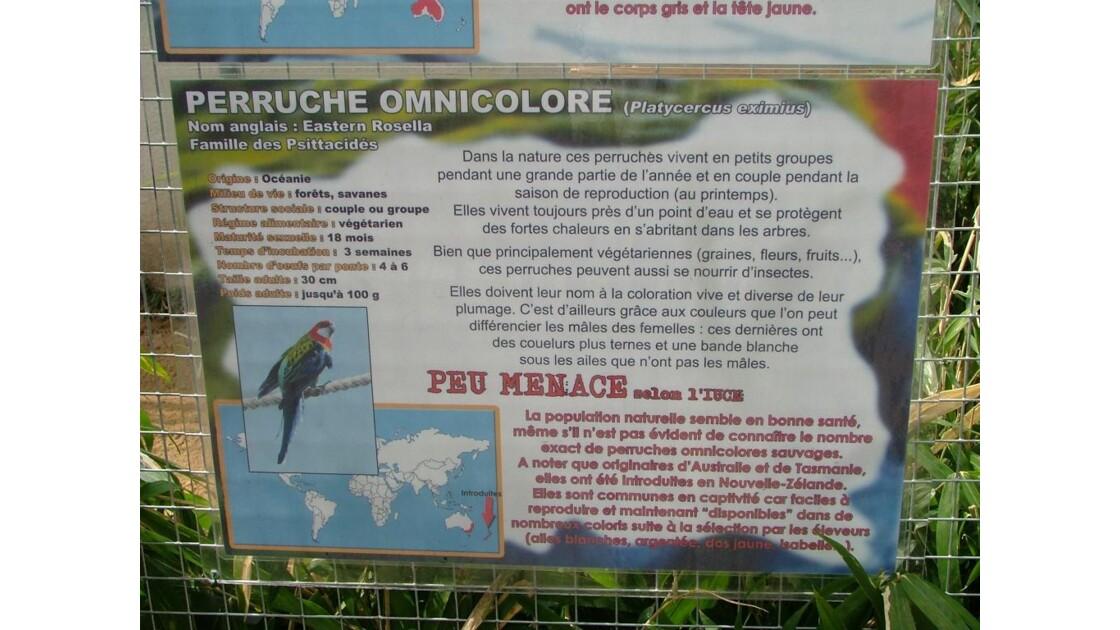 infos sur la perruche omnicolore