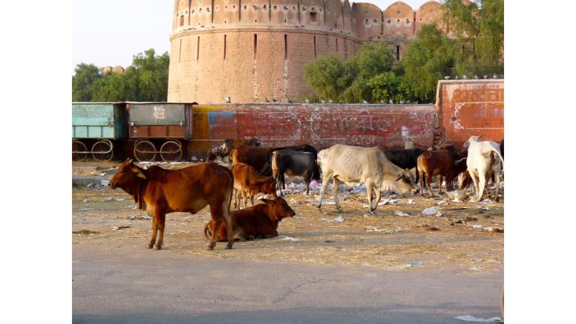 Bikaner éboueurs indiens !