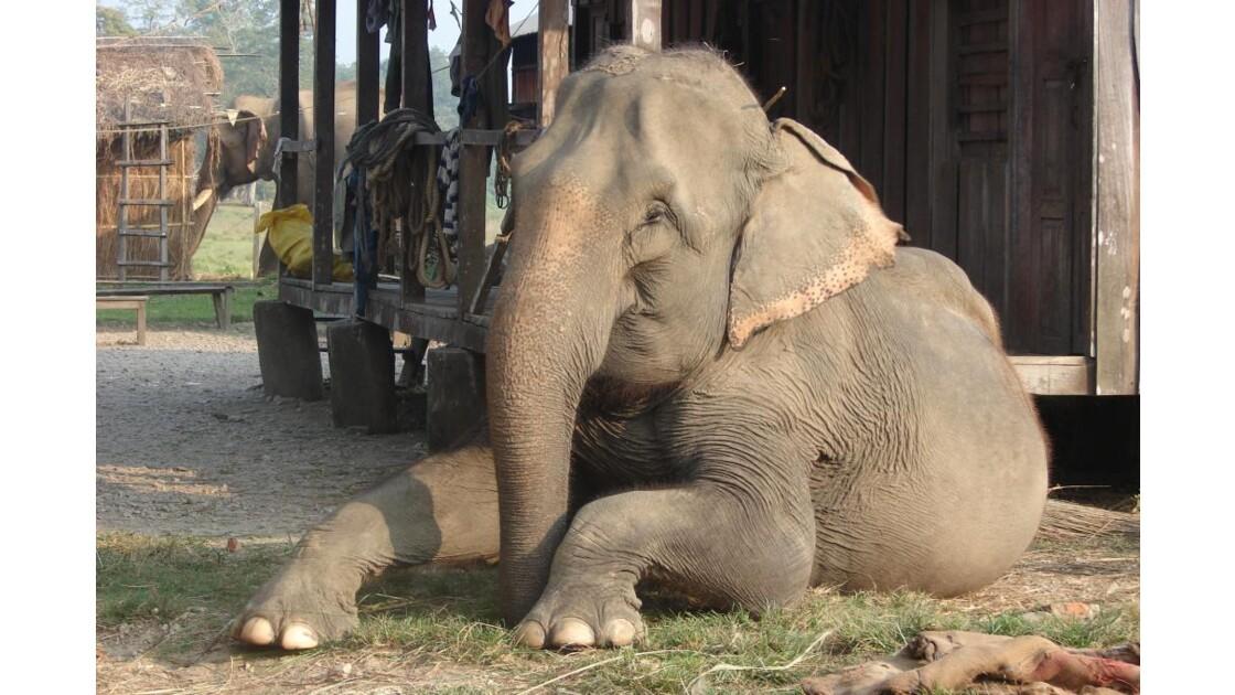 la pose de l'éléphant