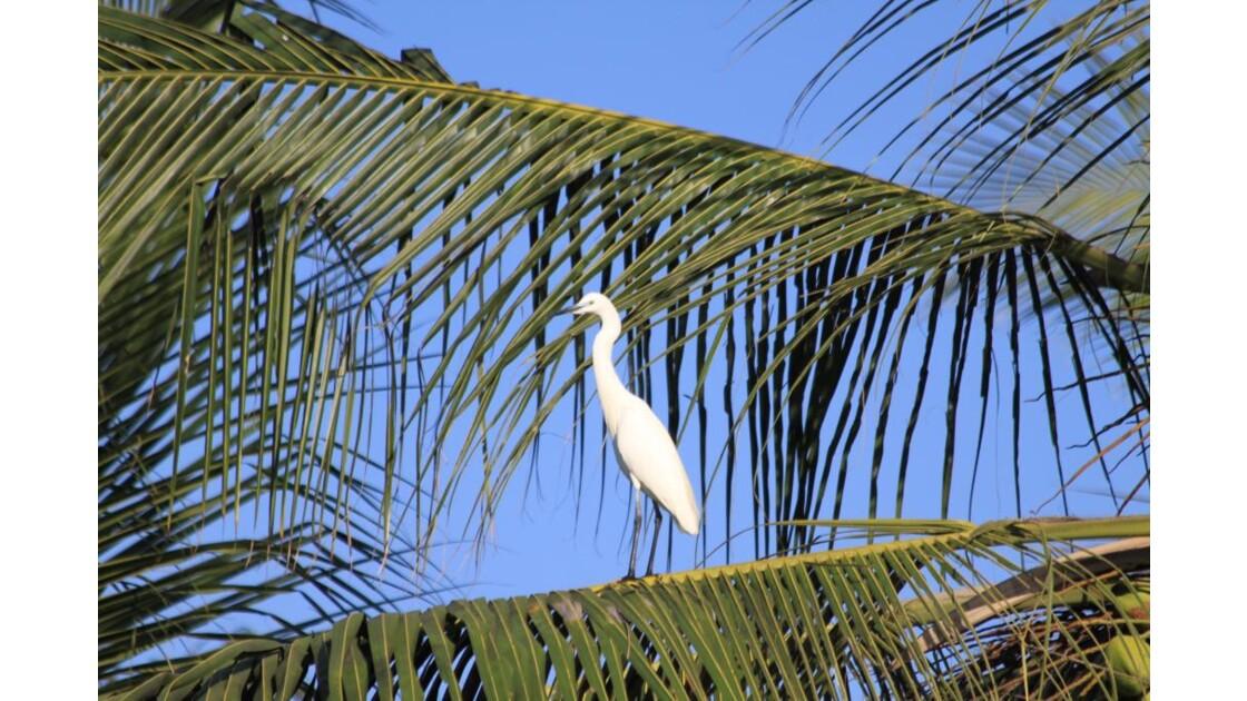 aigrette dans un palmier