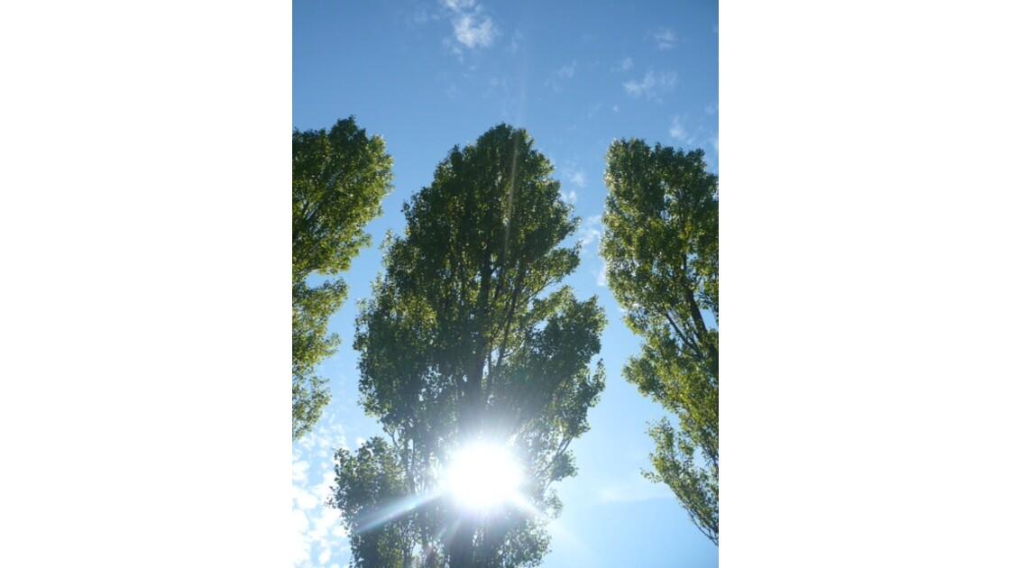 quand le soleil joue dans les arbres
