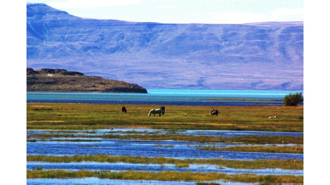 camaïeu du lac Argentino