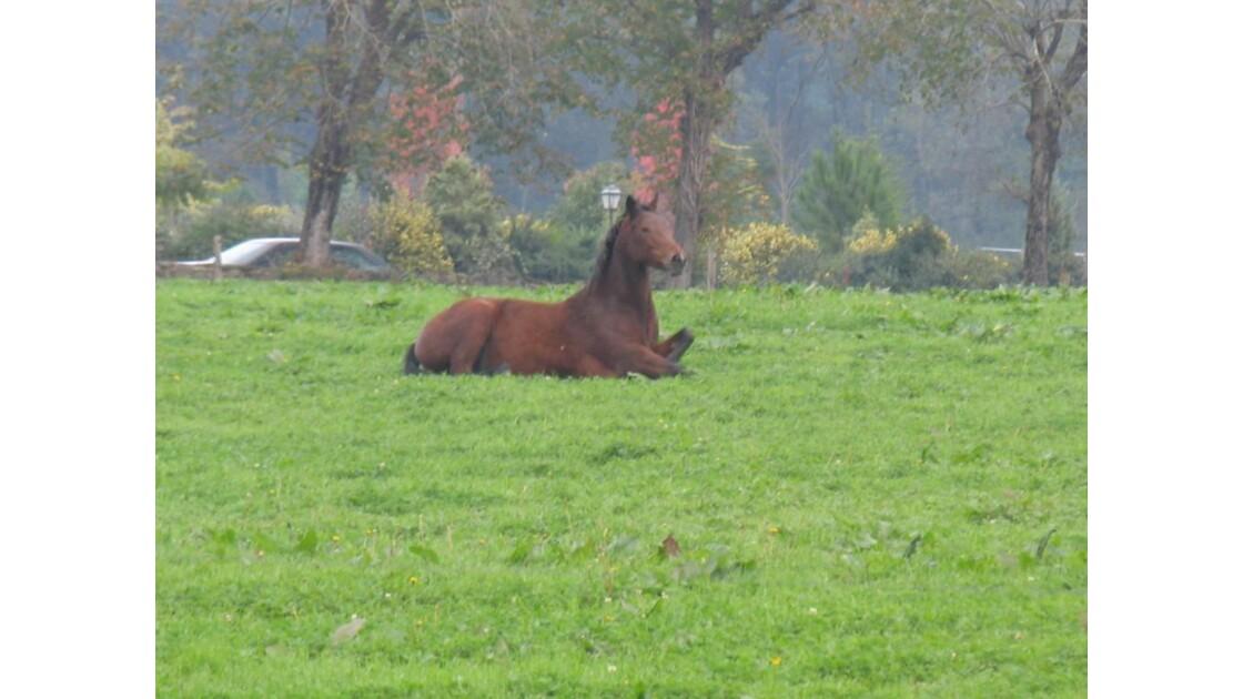 cheval basque