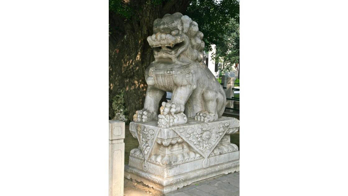 Lion protégeant son petit