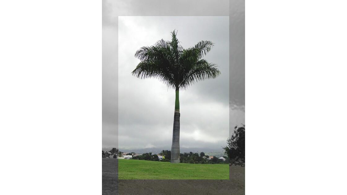 Cadrage du palmier.