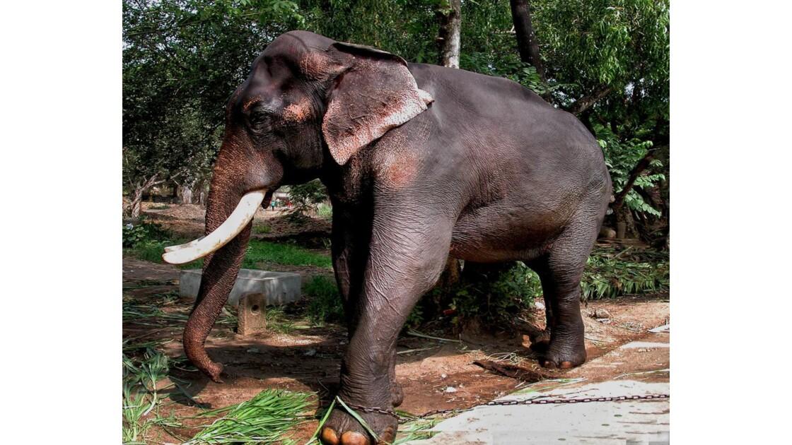 elephant 000