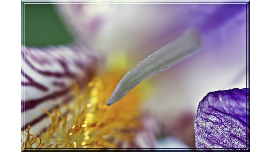 Fleur de la beauté !!
