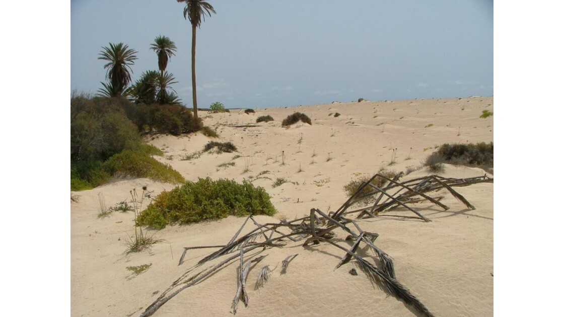 dune de Joao Barrosa