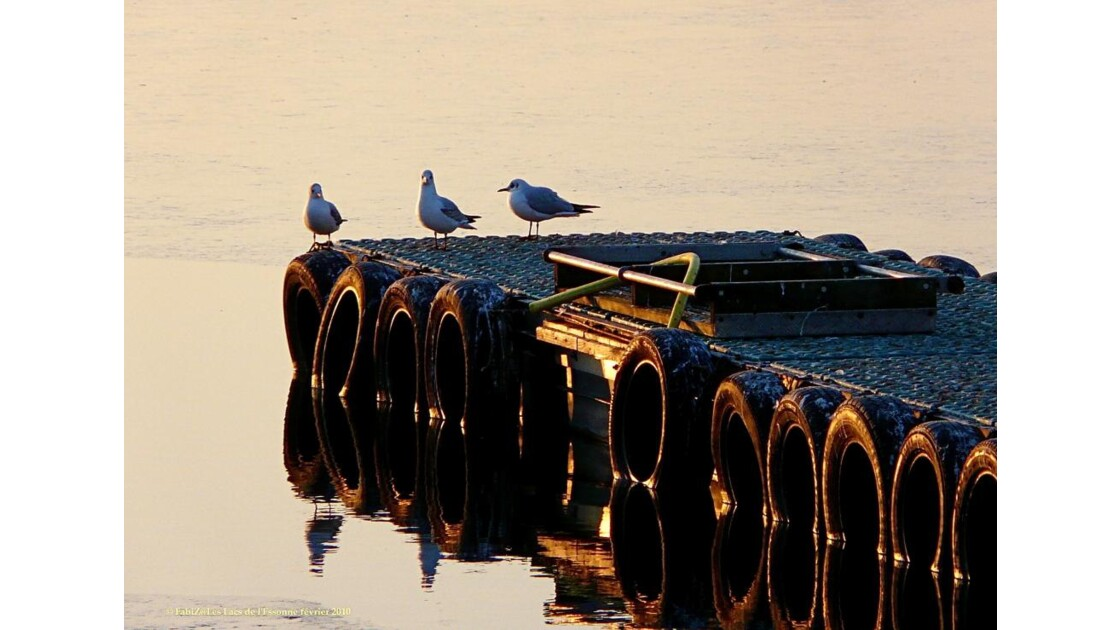 Pirelli... with Real Birds...