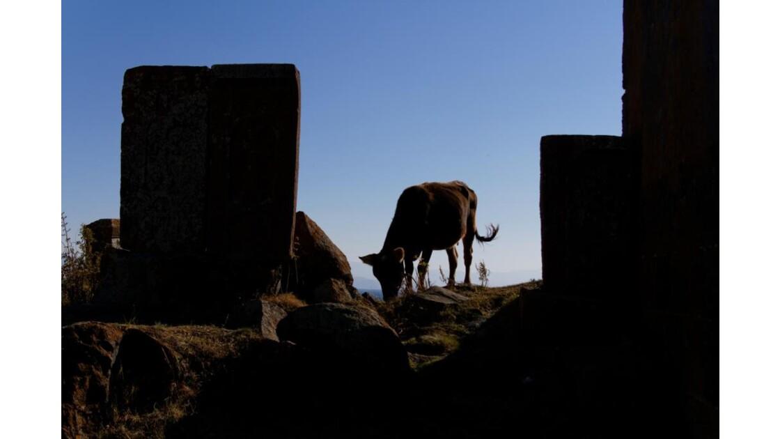 La vache et le monastère