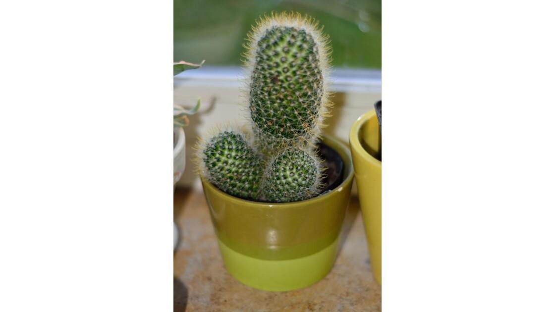 cactus subjectif