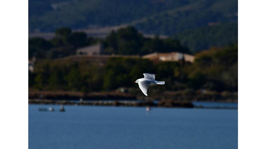 Comme l'oiseau bleu survolant la mer ...