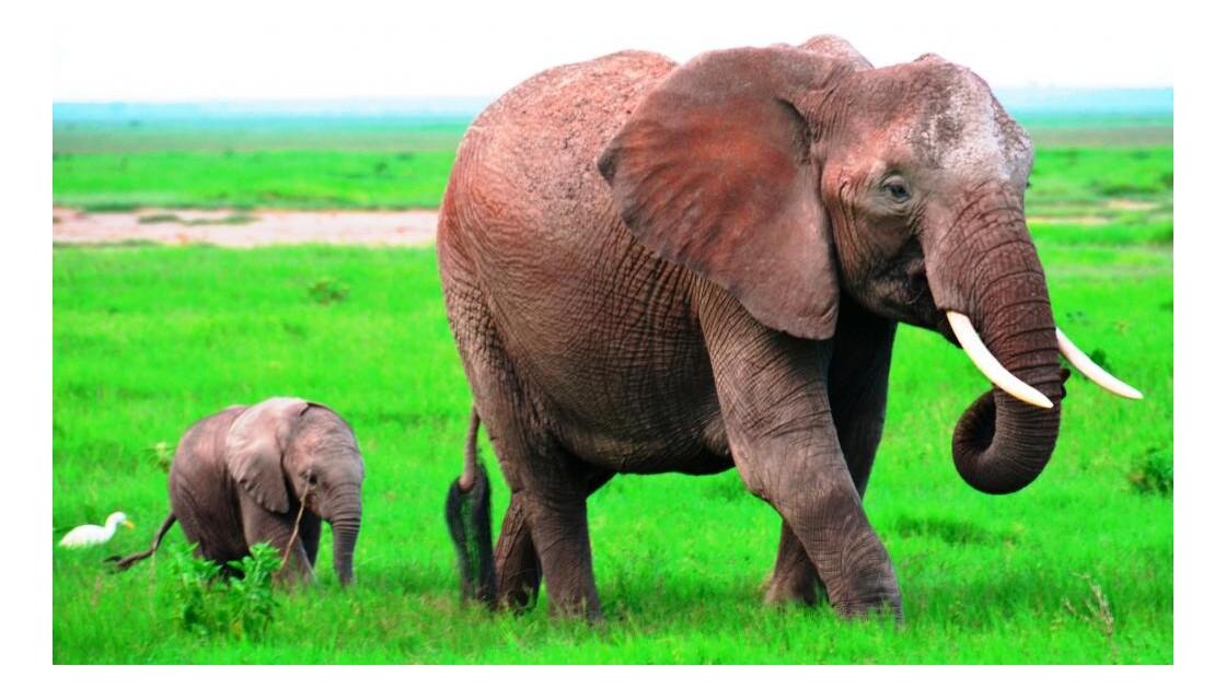 Kenya_Maman et bébé