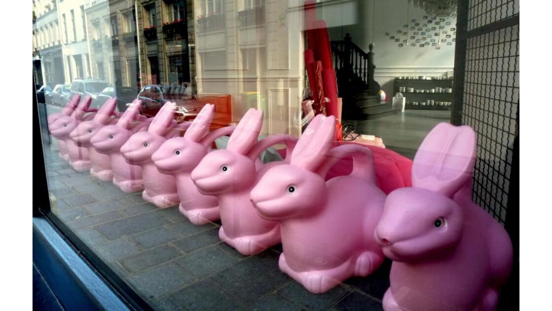 Ces lapins ont dû manger......
