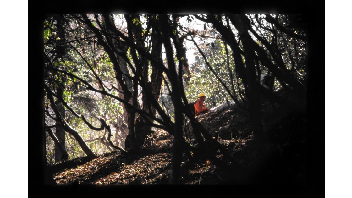 Forêt de rhododendron