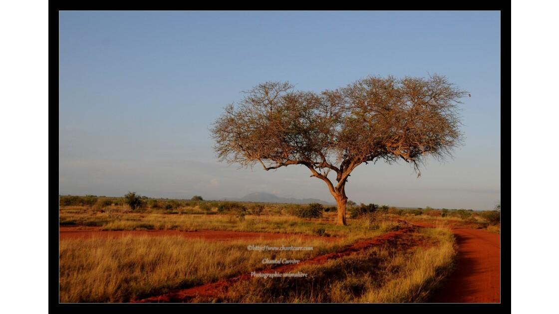 Kenya - Tsavo Est - avril 2014