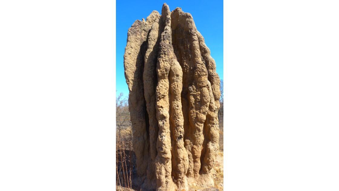 Termitière géante Australie