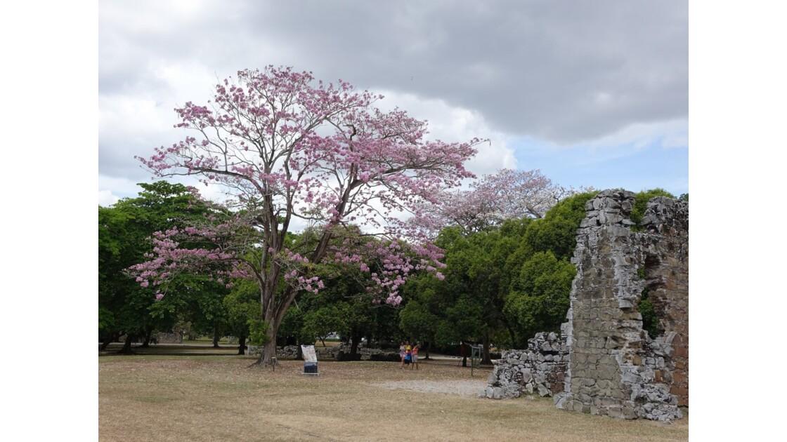 Panamá Viejo 4