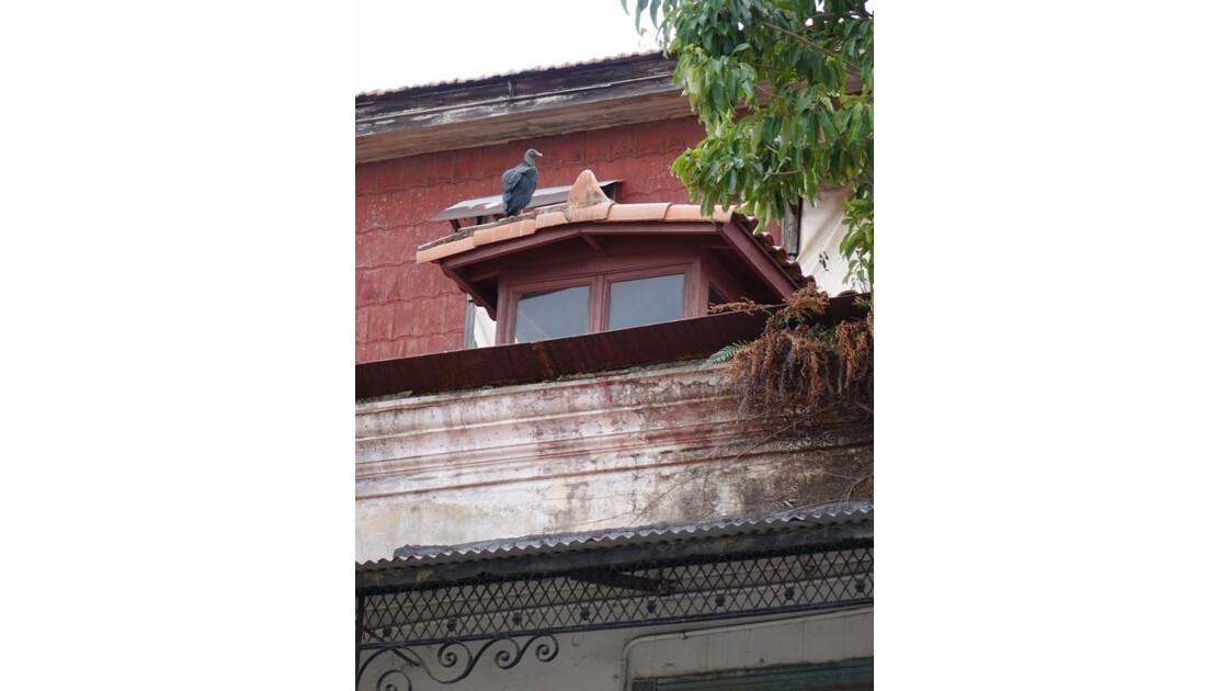 Panama City Casco Viejo Rapace 2