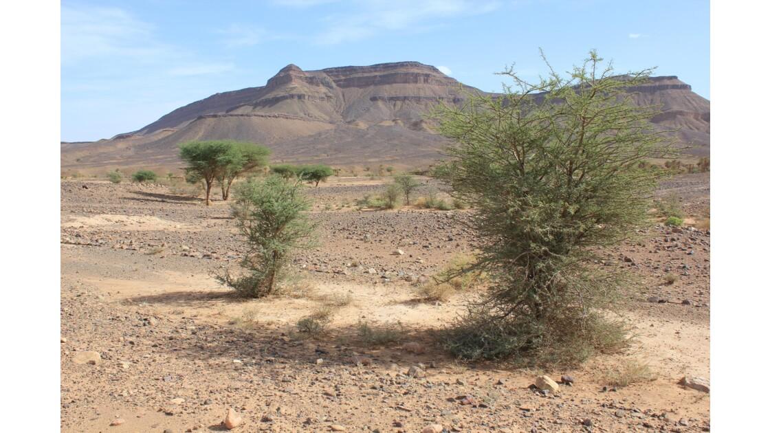 Paysage typique du grand sud marocain entre Erfoud et Alnif : au loin les sommets du djebel