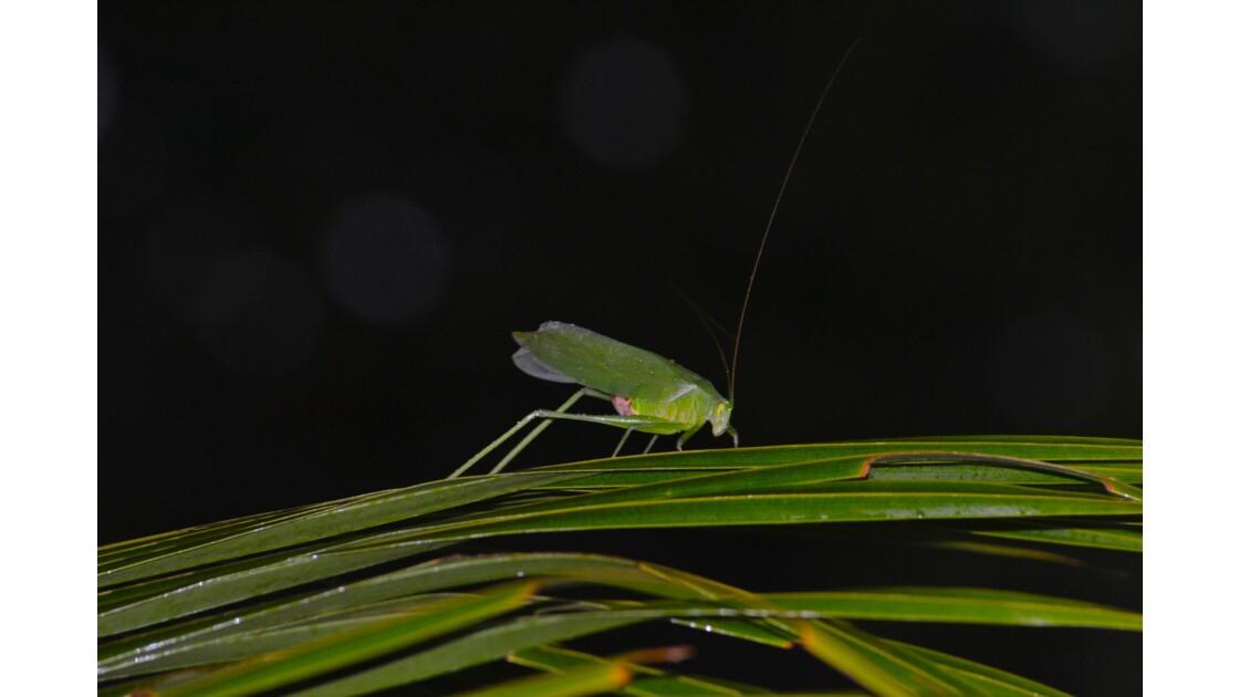 insecte de nuit