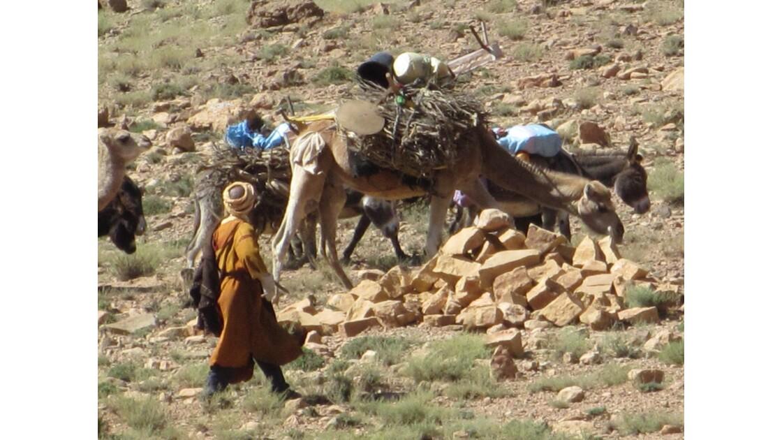 Les alentours de Tamtattouchte sont une terre de parcours pour les troupeaux des nomades