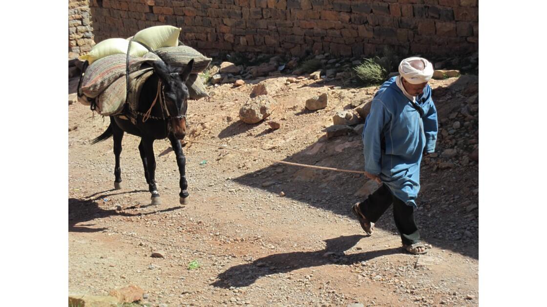 Ce berbère part avec sa mule bien chargée pour le souk en bas de la vallée du Todra à