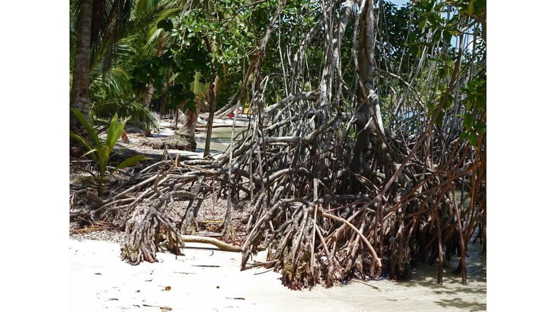 Panama Isla Carenero Playa Bucaneros 13