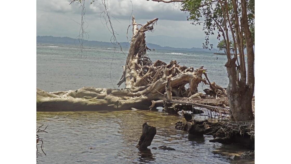 Panama Isla Carenero 4