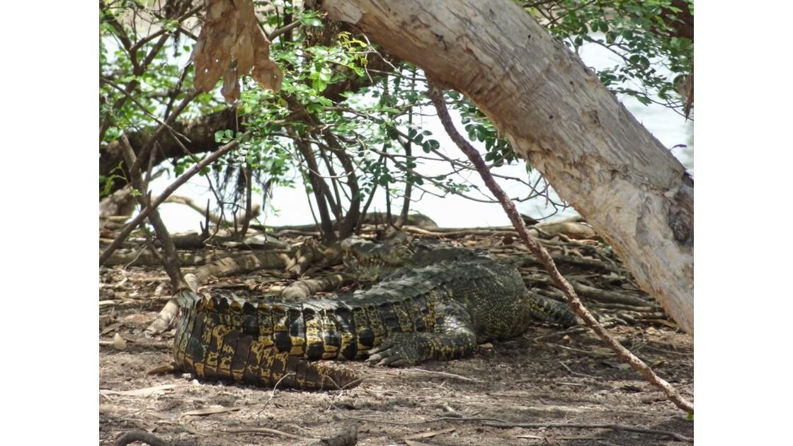 Australie Kakadu Park Yellow Water Saltie 3