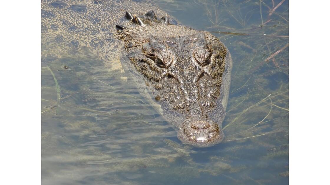 Australie Kakadu Park Yellow Water Saltie 4